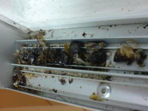 dead dead bugs caught in the railings....
